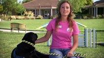 Canine Companions: Help is a Four-Legged Word