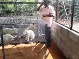 NEW RABBIT FARM CONSTRUCTED BY BENSIYAA RABBIT FARM