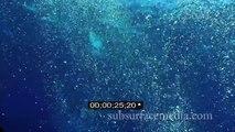 Stock Footage;  Underwater Bubble Field