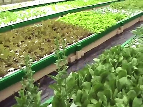 Green Acre Aquaponics video tour