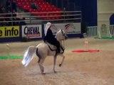 Arabian dancing horses