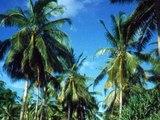 Futuna (Wallis et Futuna )