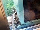 Observation Honeybees Beehive Beekeepers window,Georgia Beekeeping Honey Bees John Pluta Hive