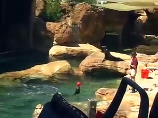 Sea Lion Show in Spanish