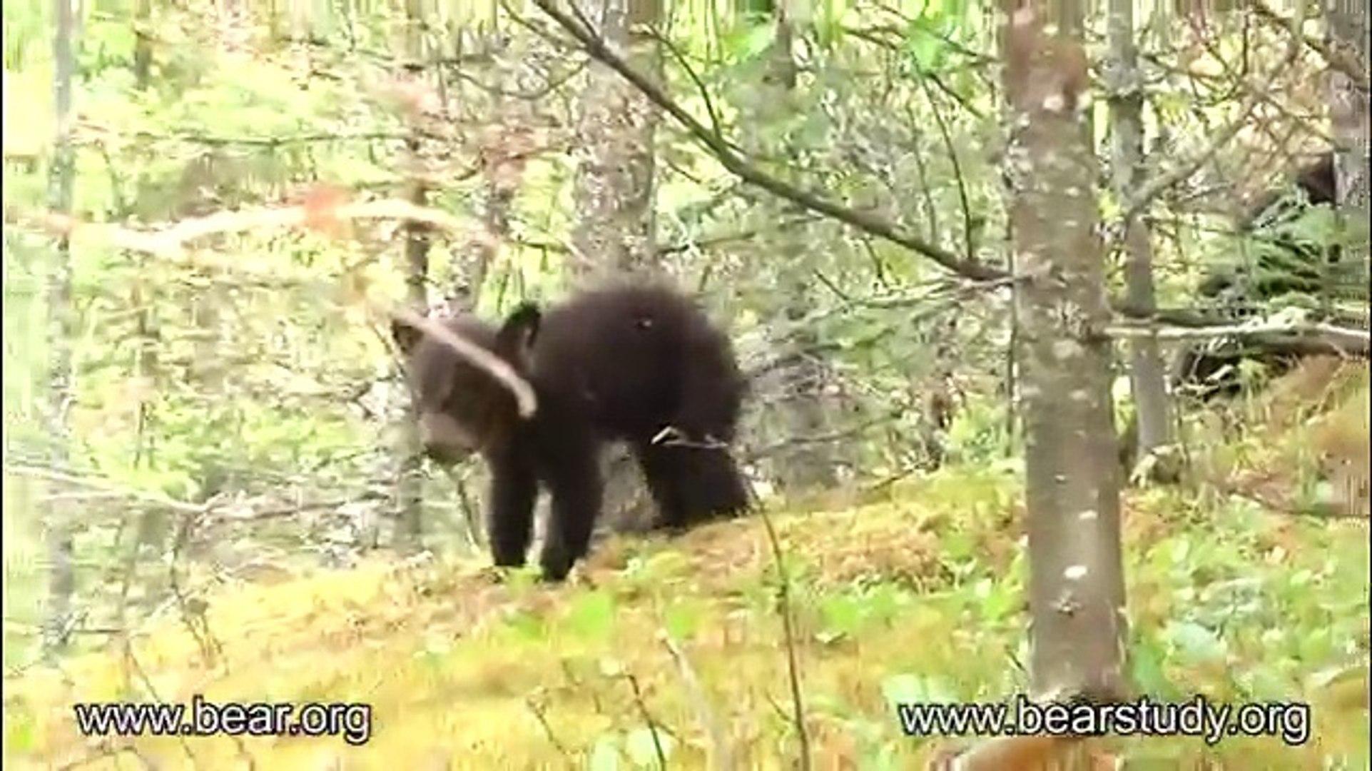 May 22, 2012 - Jewel the Black Bear - Family of Three
