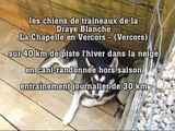 Les chiens de traîneaux de la Draye blanche (Drôme)  Vercors-14