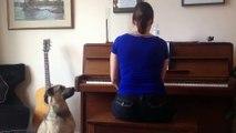 Dog Vs Opera Singer - So cute pet singing with owner