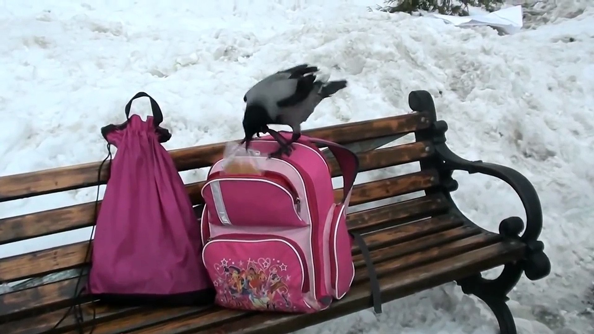 Весёлая ворона  funny crow