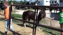 CUPCAKE2 - Barrel Horses For Sale at Gold Buckle Barrel Horses