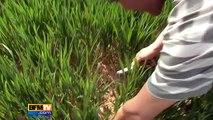 Irrigation des cultures face à la sécheresse