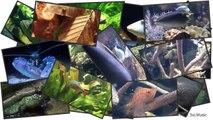[HD] Feeding Moray eels and Scorpionfish / Muränen & Skorpionfische @ Aquazoo [14/52]