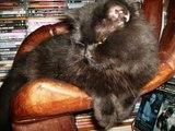 EL GATO NEGRO, En homenaje a mis dos gatos negros.