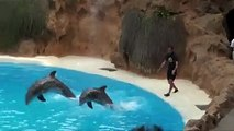 swimming with Dolphins  .... dolphins funny and interesting show..