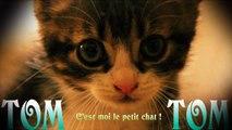 Tom-Tom Petit Chat - Bonjour Tout Le Monde !