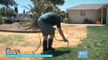 La nouvelle solution des Américains face à la sécheresse ? Peindre leur pelouse