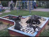 Read SOS! Feral dogs wild dogs stray cats protection of animals