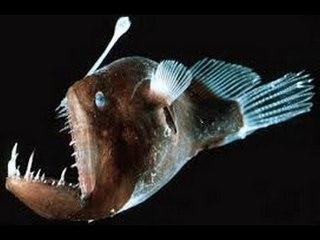 Dünyanın En Tuhaf ve Ürkütücü Balığı