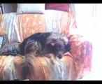 I NOSTRI CANI:     ARAMIS FIAMMA PLUTO DICK - OUR DOGS: ARAMIS FIAMMA PLUTO DICK