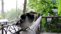 Cet oiseau a un Cri très Etrange