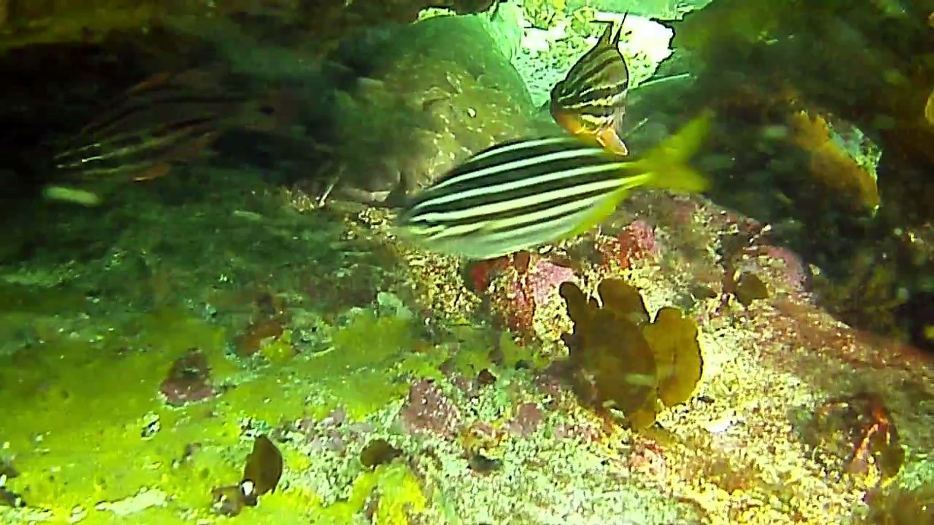 Shelley Beach Dive - The Blueys Return