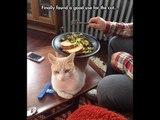 Crazy Funny Animals, Cute Little Pets & The Weirdest Animal Photos