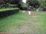 Dog Fence Bush Jump