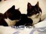 gatos hablando - sub ingles - idioma español