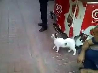 STRAY CAT ROTTWEİLER FİGHT