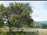 Projet d'Architecture contemporaine ossature Bois en Corse(Infographie image de synthèse)Architecte