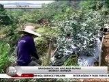 TV Patrol Central Visayas - May 21, 2015