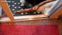 Funny and cute dog fails compilation 2014 Dogs with sticks version