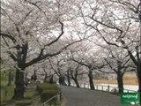 Tokyo - Le parc d'Ueno