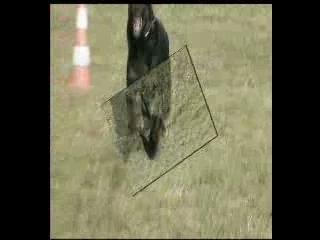 Rottweiler – Rhapsodie mars 2007