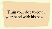 Hands & Paws in - Clicker Trick Dog Training