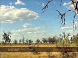 Moremi Lions In Botswana Africa