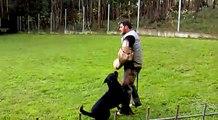 Rottweiler,. lanzado en prueba RCI/IPO