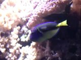 Colorful Fishes - Cool video in the Lisbon Oceanarium - Portugal