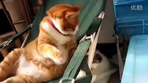 funny cats funny animals funny video cute kittens kittens cats funny cat videos