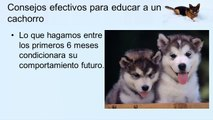 ¿Como educar a un cachorro?, Consejos efectivos para educar a un cachorro