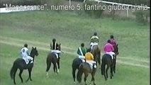 patologia tendinea in cavallo sportivo, il caso di Manacerace - Cellule staminali del sangue