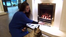 Gas Fires & High Efficiency Gas Fires