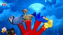 Birds Finger Family Songs - Nursery Rhymes For KidsChildrens - Videos - Latest Rhymes