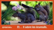 Un écureuil, un photographe, un parapluie... et une astuce !