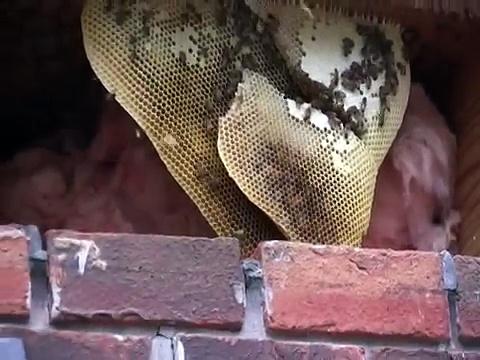 Honey Bee Cutout 7/11/09