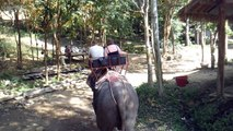 ELEPHANTS ON KOH CHANG - ELEFANTES EN KOH CHANG - СЛОНЫ НА КО ЧАНГ- ÉLÉPHANTS SUR KOH CHANG