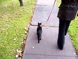 Chat marche aux pieds