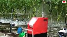 Praca w Holandii - praca w szklarni.Opryski. Robot szklarniowy. Od andrju1969