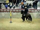 rocinante de dinastia dos en competencia en el gran campeonato de caballos trochadores