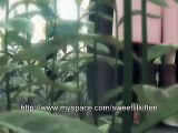 Final Fantasy VII Advent Children Cloud's Memory Tribute