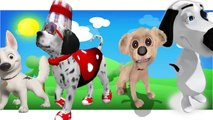 3D Dog Finger Family Collection 3D Dog Cartoon Animation Nursery Rhymes for Children